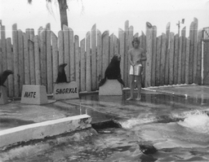 Russell McLendon works with several sea lions at the Gulfarium.